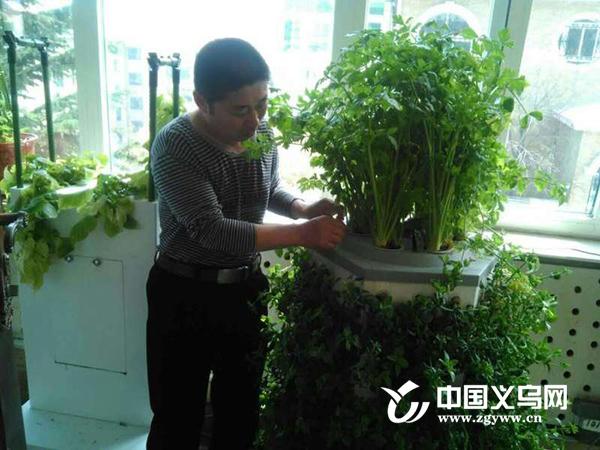 义乌农商首创家庭式气雾栽培装置 不用土壤就能在阳台种菜