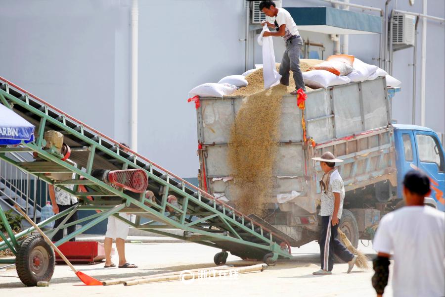 温岭早稻订单创新高