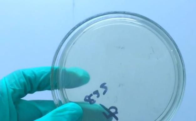 微商试验室——体蜜卫生巾微生物检测