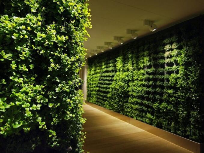 """把春天""""租""""回家 绿色植物租赁业务渐热"""