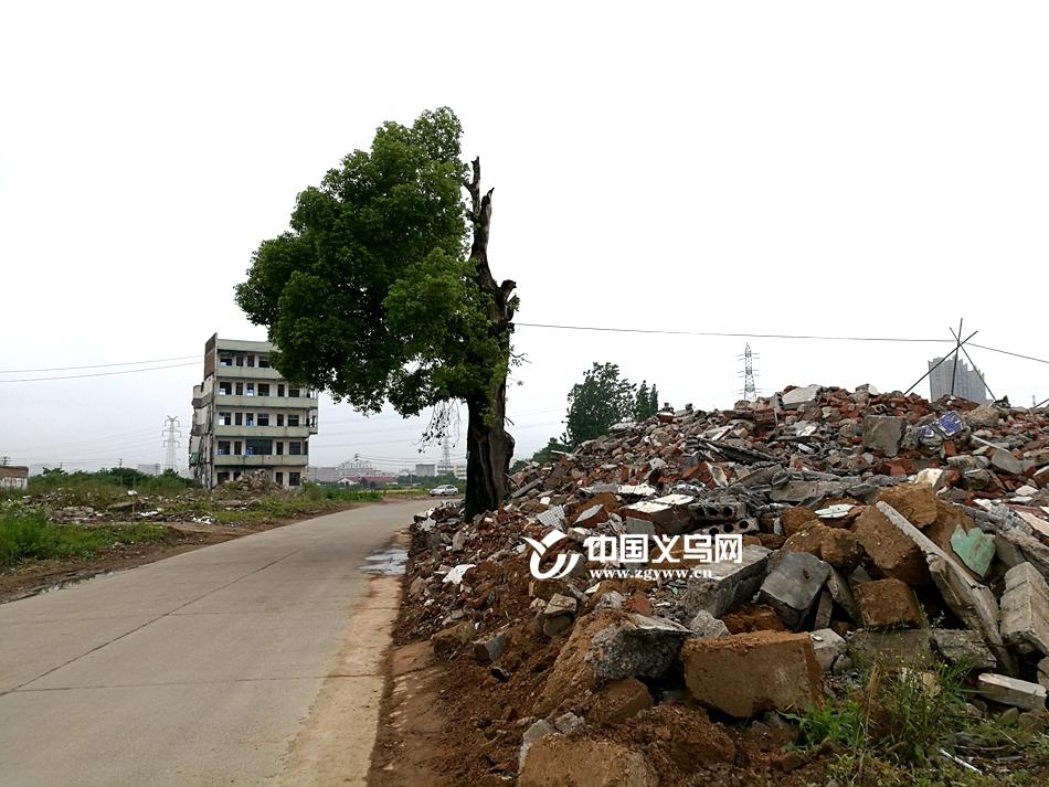 村庄拆迁工厂偷倒 300年古香樟树遭遇垃圾围城