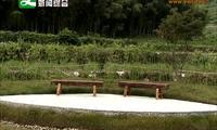 上溪镇古塘下村:美环境 育产业 争创三星级美丽乡村