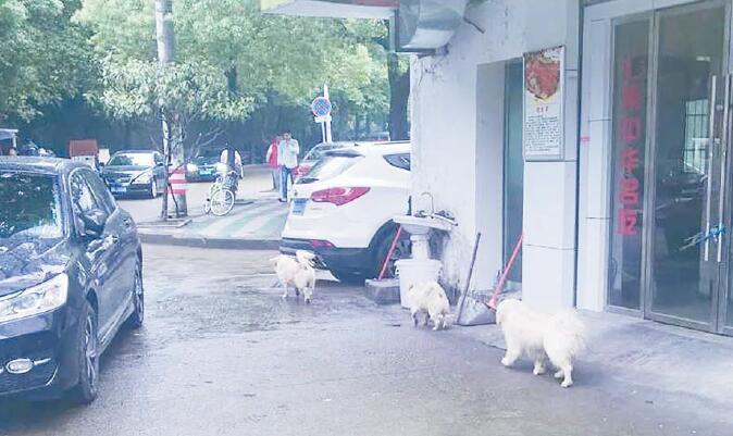 """流浪狗时常惊吓路人 义乌街头""""狗患""""越来越严重"""