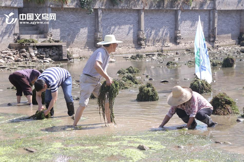 网络护水队助力义乌生态护水 打造碧水商城新画卷