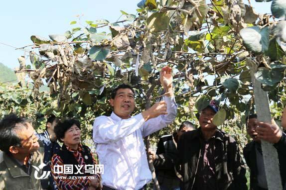 义乌市科协举办猕猴桃培训班