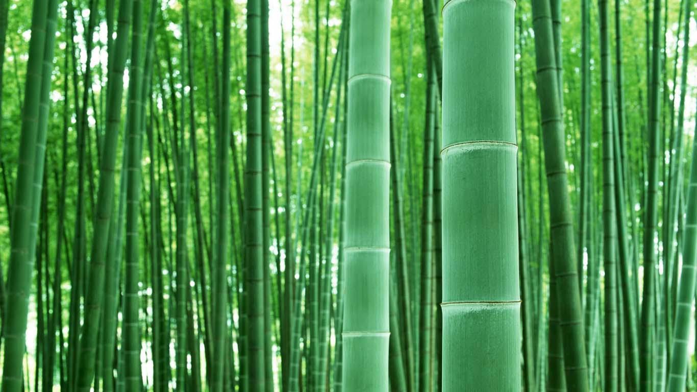 用竹子建地下管廊、造高铁车厢,可行吗?