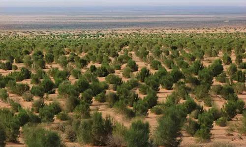你的梭梭树长什么样了?蚂蚁森林喊你来实时看树
