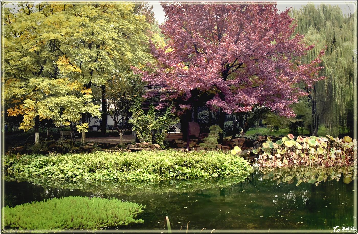 骆宾王公园秋色浓