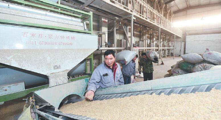 义乌:烘干稻谷安全归仓