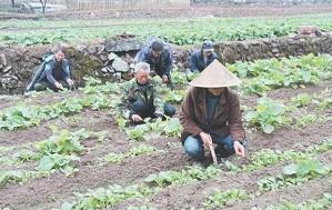 义西小山村打造百亩油菜花海