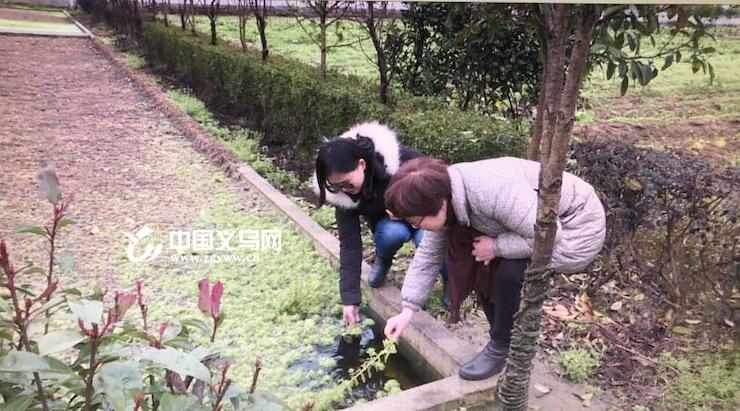 """雨雪冰冻将至 义乌农林局及时部署打好""""雪仗"""""""