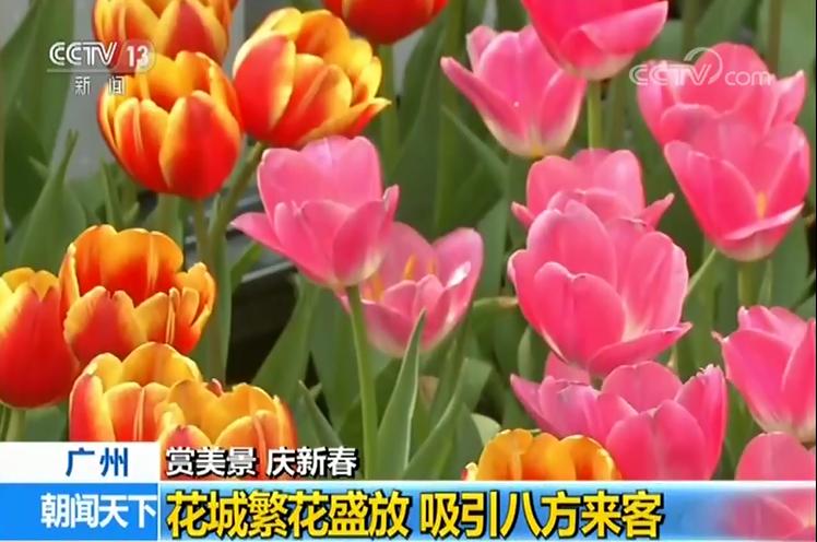 3300盆兰花绽放 春冬景色惹人爱