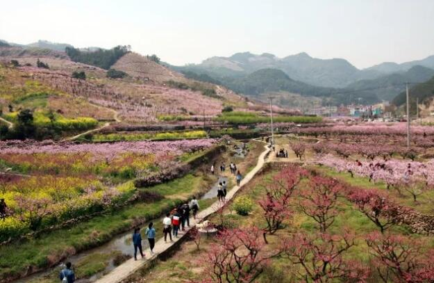 """春暖花开 跟着这份""""浙江赏花地图""""一起来义乌赏花吧"""