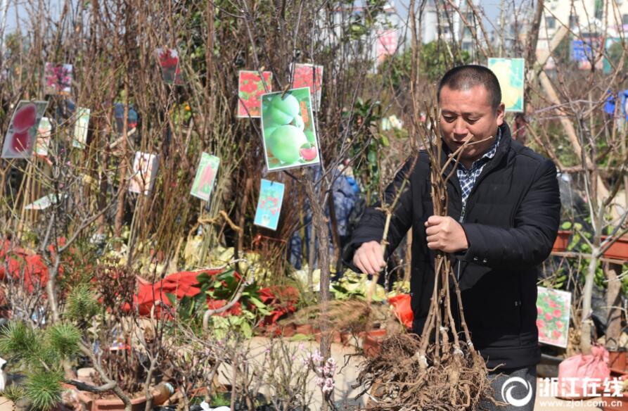 义乌:选购苗木 绿化家庭