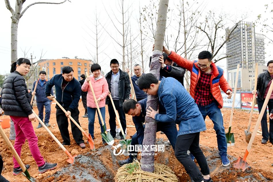 同心共为商城添新绿 义乌开展义务植树活动