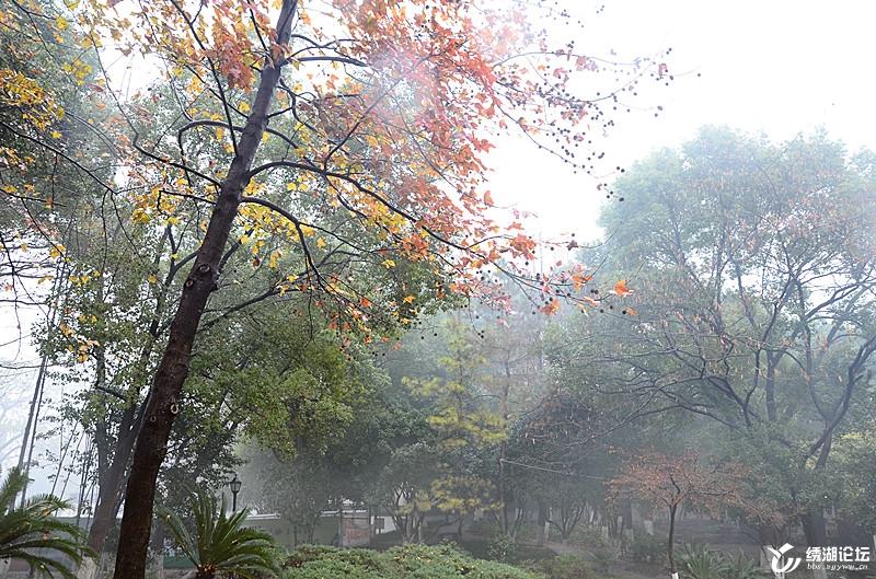 骆宾王公园:冬雨迷蒙,落英缤纷