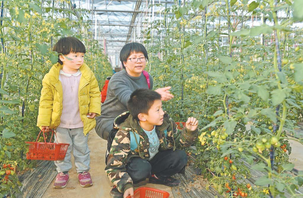 义乌:生态果蔬惹人爱