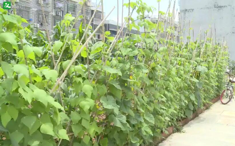 福田街道银海三区:绿地规划滞后 空地种菜普遍