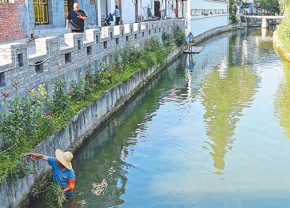 义乌:党员护水净河道