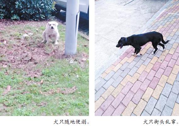 """义乌街头、小区、公园犬只乱窜 """"狗患""""仍是一大隐忧"""