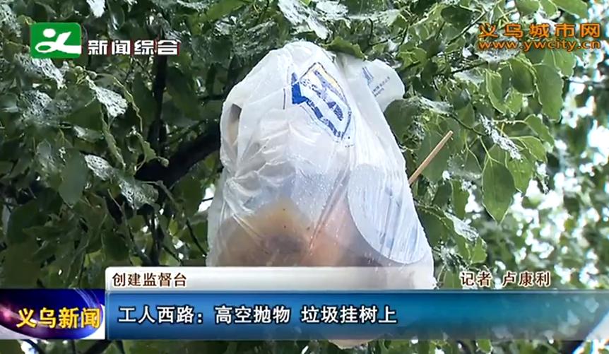 义乌工人西路:高空抛物 垃圾挂树上