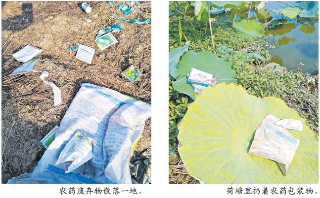 散落田间地头 埋下安全隐患 义乌农药包装物污染环境让人忧