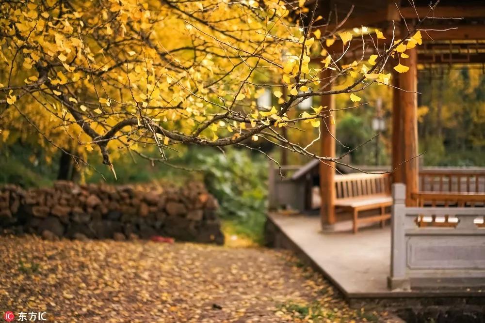 9月最佳目的地:各地秋色接连上线 这些地方就是小众赏秋首选地