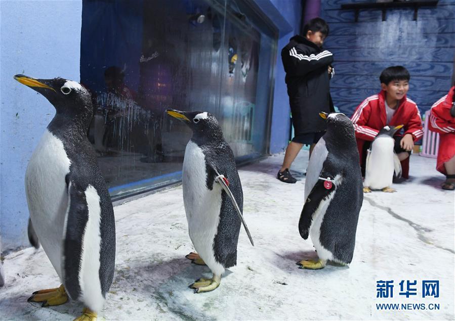 青岛海昌极地海洋公园企鹅学园举行科普公开课