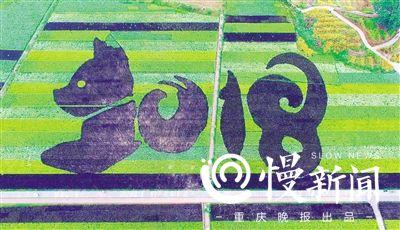 重庆多彩稻谷打造大型观赏田