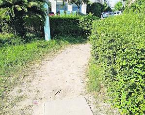 """经发大道江南四区段:500米绿化带被踩出7条""""人行道"""""""