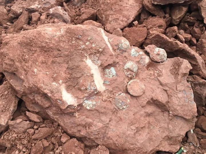 义乌发现15件完整恐龙蛋化石 专家称距今8000万年左右