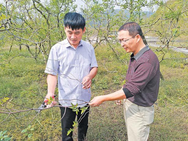 """40年40人(6)杜成兴和他的""""浙江第一枣林"""""""