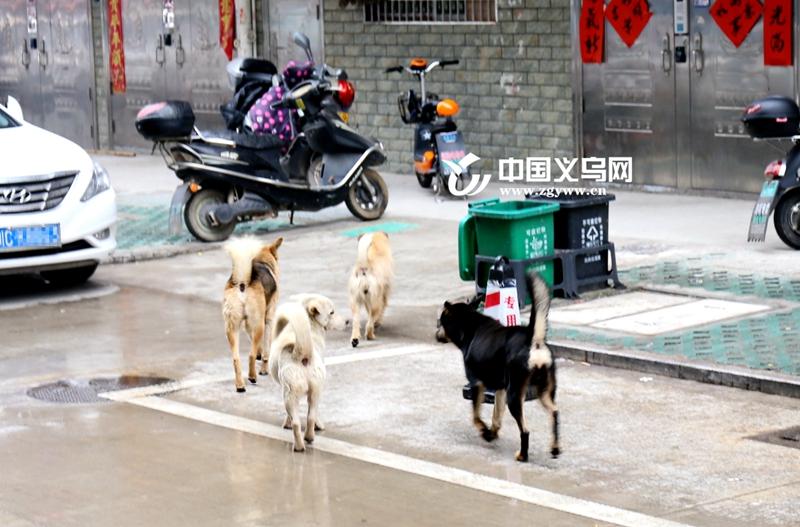 市民反映北苑柳二村流浪狗存隐忧 街道一下午就捕捉了13条