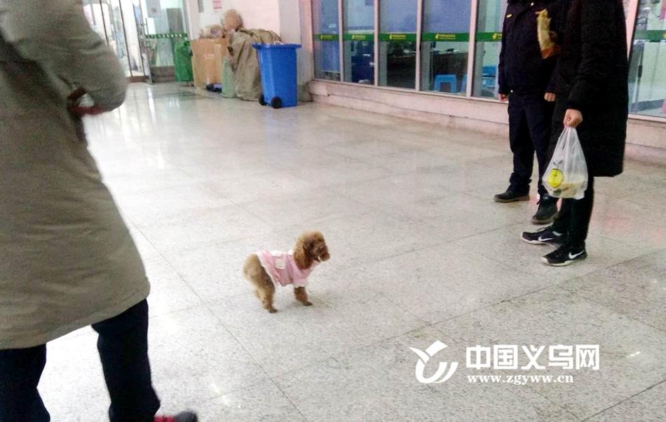 罚款300元 义乌开出首张不文明养犬罚单