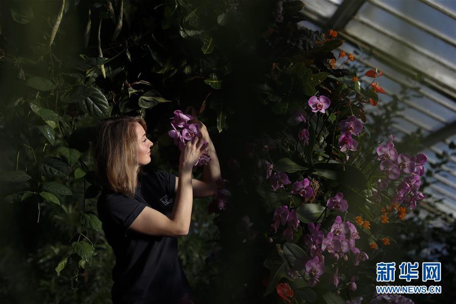 伦敦邱园兰花展 感受哥伦比亚色彩