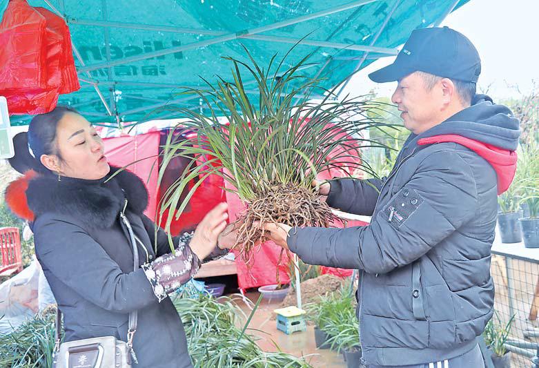 义乌苗木市场交易忙