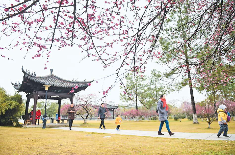 义乌:梅花盛开迎春来
