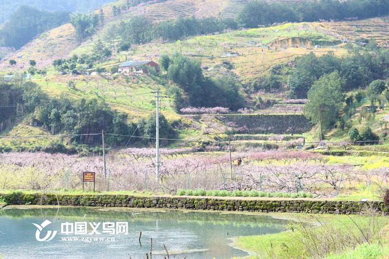 十里桃花笑靥红 义乌上溪乡村旅游文化节开幕