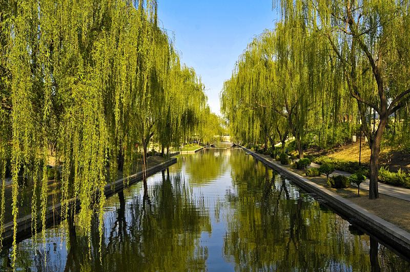 义乌绣湖公园的柳树坑洼脱皮?园林部门:已在喷药治虫