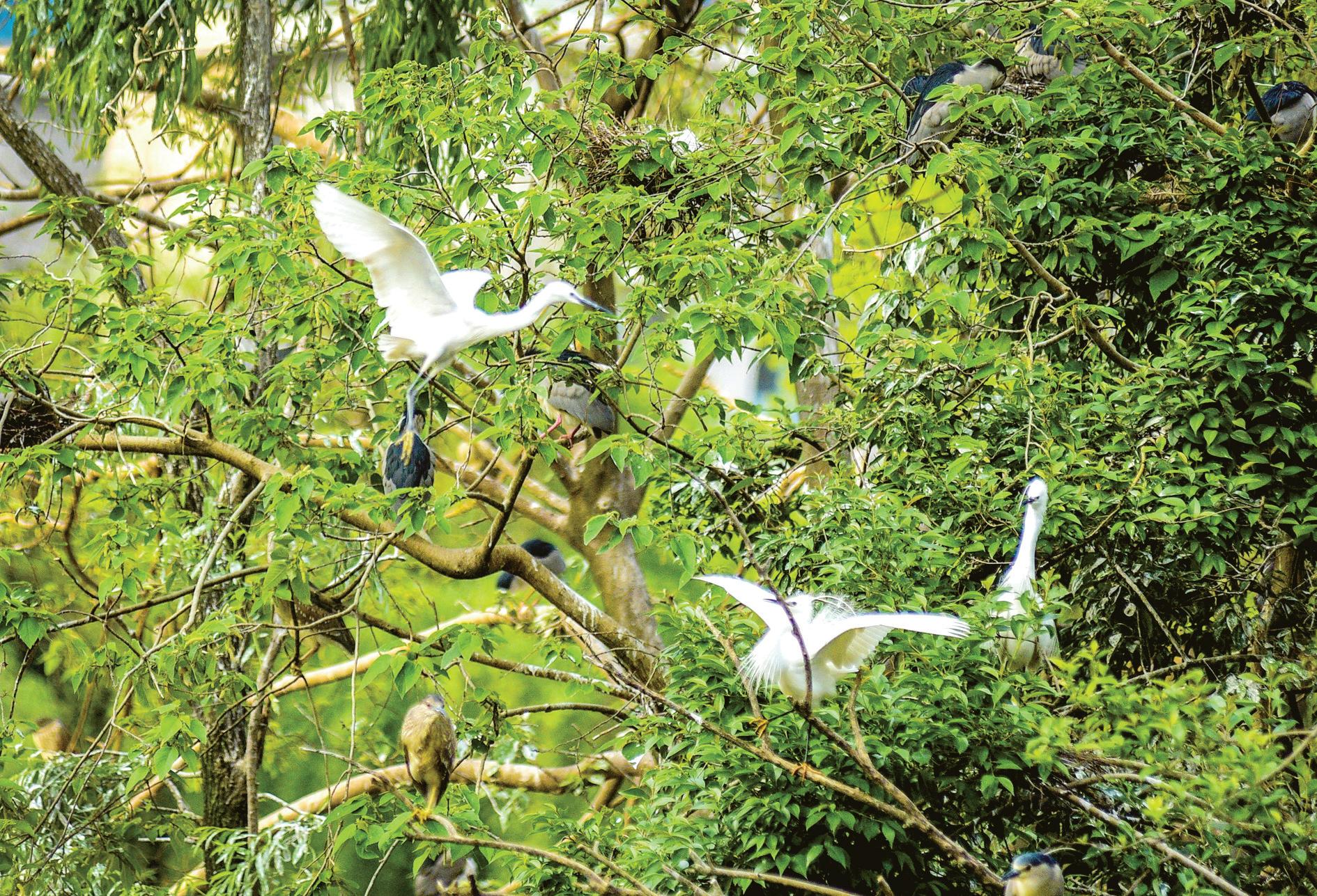義烏環境日益改善 公園鳥兒增多