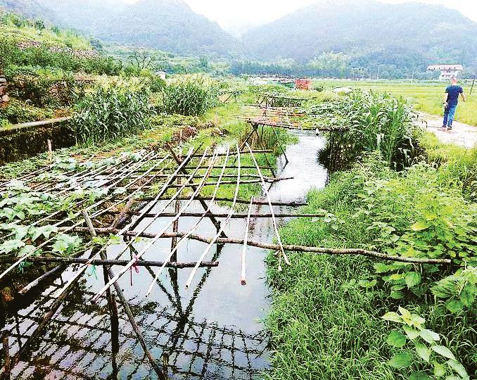 """义乌丹溪河道成""""菜园"""",柏峰水库一旦泄洪怎么办?"""