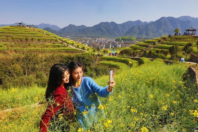 义乌:300亩油菜花进入盛花期 游人画中游