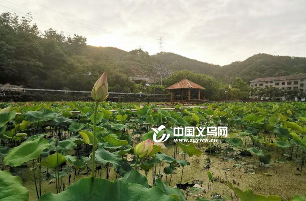 义乌市上溪镇潜溪村:创新农村发展思路打造特色生态产业链
