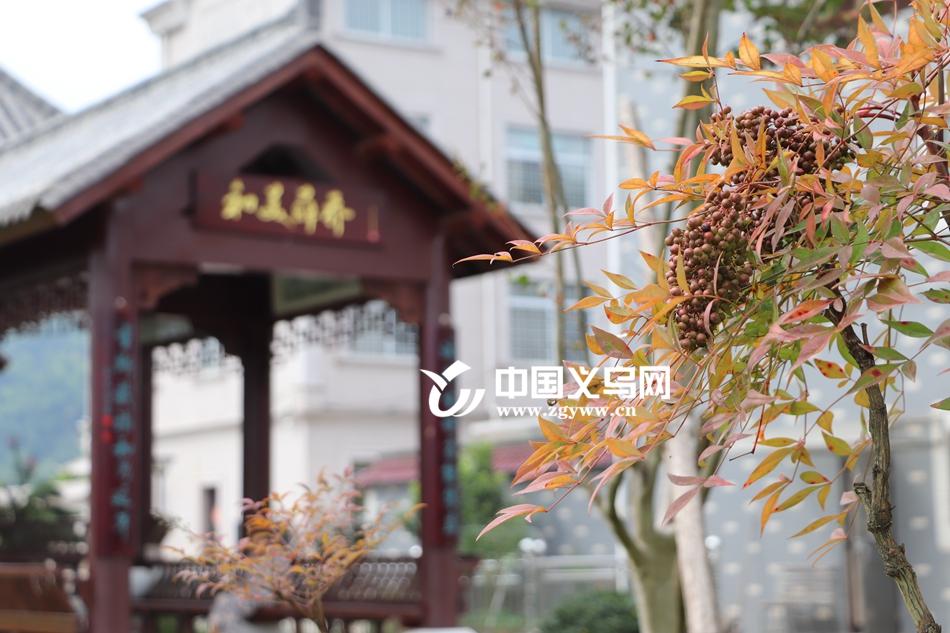 """放眼望去重林叠嶂 """"云游义乌""""第二站走进薛乔村"""