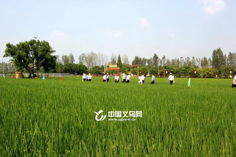 共享丰收喜悦 义乌义亭枧畴水稻产业园举行开园仪式