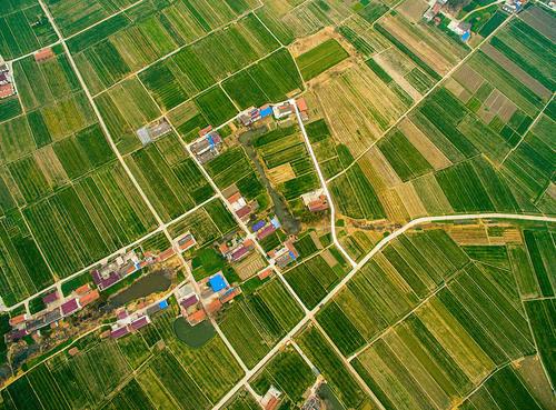 """农具是手机 农村电商""""播""""出一个个新农村"""