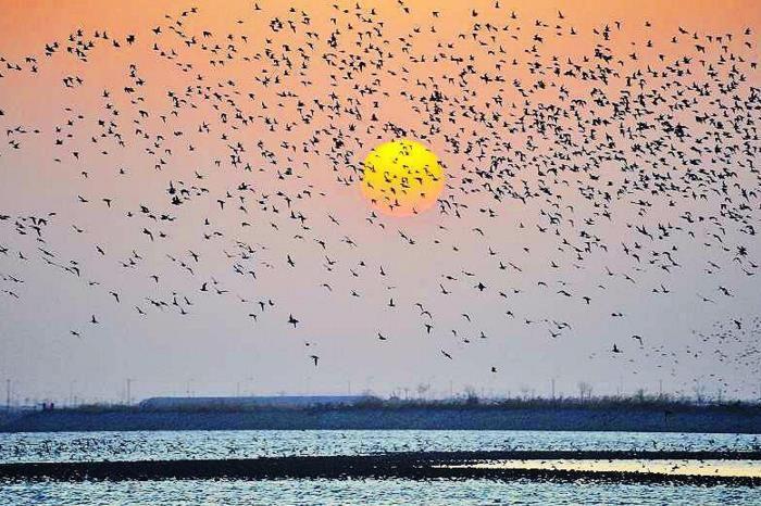 东亚-澳大利西亚迁飞路线中国候鸟保护网络建设启动